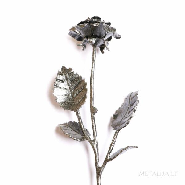 Kalviška rožė